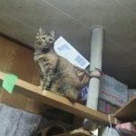 最近猫たちが私の部屋にたむろしてゴソゴソしてて困る