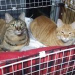猫たちが私のベッドを占領して寝不足になるので対策した