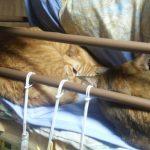 2時ごろ寝ようかと思ったら猫達にベッドを占領されていた