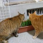 朝っぱらから猫のゲロを踏む