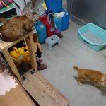 うちの猫達の写真5枚