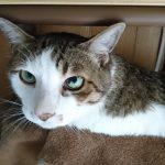 糖尿病の定期診察でレオを動物病院に連れて行ってきた