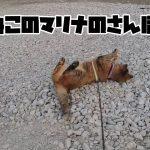 【動画】マリナのお散歩動画
