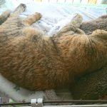 昼間はいつも寝てる猫たち