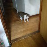 [2020-10-22]猫たちに猫草を振る舞う