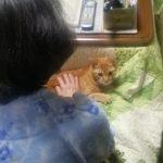 母に抱っこされて甘える猫たち
