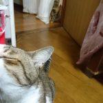 先住猫と仲良くなれなくても一緒に暮らすことはできる件について