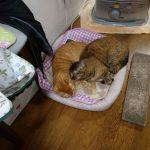 最近の猫たち「マリナと散歩」「レオにまた色々買って来た」